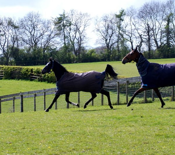 Galloping Horses Helmsley