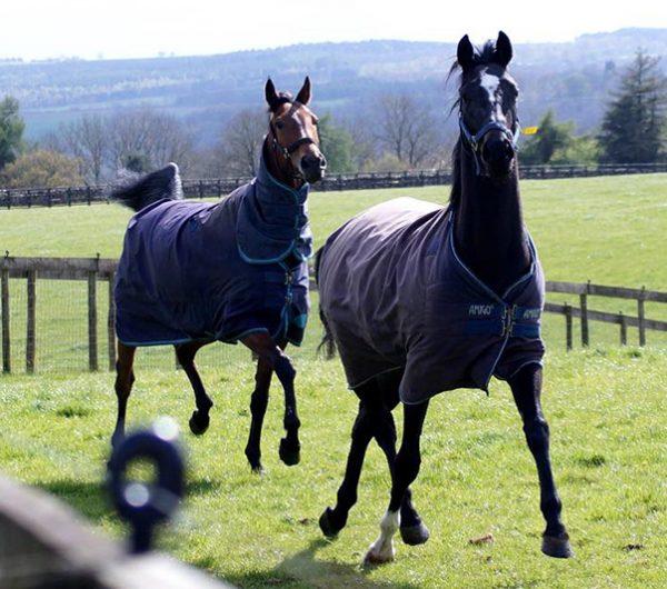 Horses Helmsley Cliff Stud